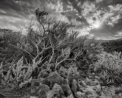 Sparrow's Cave (Eddie La Mole) Tags: sparrowscave manatí beach coastaldryforest blackandwhite film kodakektar pentax6x7 pentaxsmc45mm