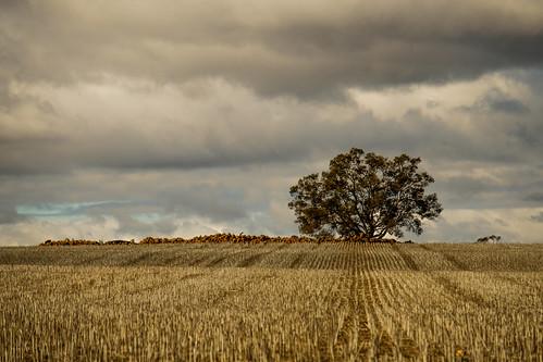 The Cut Fields