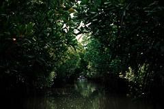 Pichavaram Backwaters (Premnath Thirumalaisamy) Tags: pichavaram backwaters premnaththirumalaisamy travel choladynasty visitingcholas boatride mangroveforests tamilnadu
