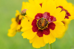 The Flower and the Beast (Martine Lambrechts) Tags: the flower beast insect nature macro