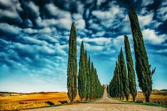 Val d'Orcia - Poggio Covili (elparison) Tags: blu blue val dorcia tuscany toscana italia landscape italy tree alberi special