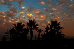 clouds (annemwo) Tags: beach seaside palms trres nature outdoor clouds sky color pink summer evening