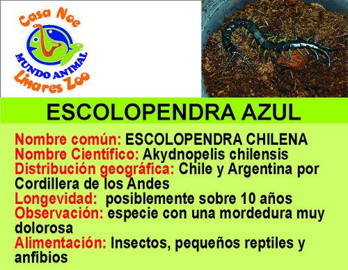 escolopendra azul