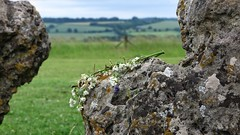 Rollright stone circle, Oxfordshire 2017 (Elisabeth Redlig) Tags: oxford elisabethredlig history travel rollrightstones neolithic standingstones paganism mystery summer summersolstice offerings