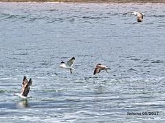 Huelva 16 (ferlomu) Tags: andalucia ave ferlomu huelva odiel rio