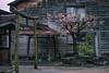 Narai, Japan (inefekt69) Tags: japan narai street post town asia edo traditional nikon d5500 日本 奈良井 奈良井宿 naraijuku nakasendo torii gate shrine kisovalley cherryblossoms cherry blossoms sakura flowers hanami kwanzan doublecherryblossom yaezakura
