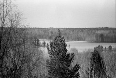 (Sergey Patskevich) Tags: ilfordpan100 ilford canon tree forest lake karelia branches sky nature spruce sampo bw analog film