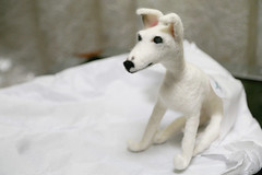 52 in 2017 Challenge - #45 - Precious (crafty1tutu (Ann)) Tags: challenge 52in2017challenge 45precious animal dog whippet white shiloh pet felt feltedanimal crafty1tutu canon1dx canon24105lserieslens anncameron precious gift special