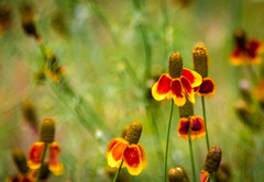 Happy Bohken Wednesday (Jims_photos) Tags: wildflowers outdoor outside bohken adobelightroom shadows sunnyday daytime flowers jimallen jimsphotos jimsphotoswimberleytexas lightroom landscape nikond750