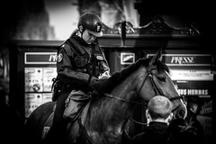 ckeck the notes (Günther Bayerle) Tags: police horses