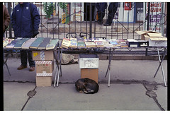 The Dog and books (Alimkin) Tags: краматорск пленка 35mm 35mmphotography 35mmfilm analogfilm alimkin analogphotography analog film filmphotography filmisnotdead filmshooters filmforever color colorfilm traditionalphotography lomography street streetphotography streetlife streetshot society shootfilm saveanalogcameras donbass kramatorsk dog market