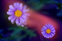 秘密花園裡的活躍小人國 (Curitis Chen) Tags: macro sony sonya7ii sonyalpha flower 花 微距 抽象