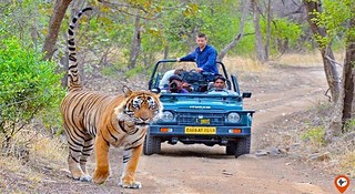 Private-Jaipur-to-Ranthambore-Tour-Package-ranthambore-national-park-safari