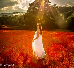 Angelic Dreamer in a sea of poppies (femmaryann) Tags: dreaming lady girl woman nightdress poppies field outdoors steamtrain smoke scenery beauty trees sunbeams sunshine heat
