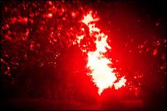 20160824-164 (sulamith.sallmann) Tags: natur pflanzen baum blur bäume cotentin effect effekt filter folientechnik france frankreich lahague leuchtend manche nature normandie pflanze plants red rot sonnenlicht tree unscharf unschärfe verzerrt vivid fra sulamithsallmann