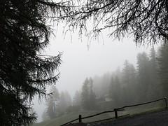 Piove al Plassecc (quanuaua) Tags: ifttt 500px mist landscape fog nature light tree wood weather conifer outdoors evergreen no person