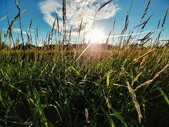 #Field #LGG6 (thnewblack) Tags: lgg6 field lg g6 android outdoors nature britishcolumbia sunflare wideangle country vsco 13mp hdr