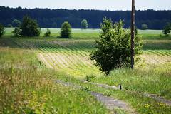 (Ciuchniecki Photography) Tags: podlasie podlaskie gminazabłudów folwarkimałe nature natura poland polska magiapodlasia