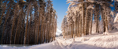 Golden hours (NoPanicMD) Tags: woods road magic golden snow winter landscape nature panorama pano