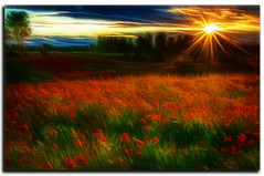 Poppy Art (stblackburn) Tags: poppies flower landscape outdoor northeast sunset sunburst