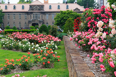 Rose garden (yanoks48) Tags: rose バラ garden 庭園 sapporo 札幌 hokkaido 北海道 japan 日本 park 公園 札幌市資料館 flower 花 ōdōri ōdōripark 大通公園