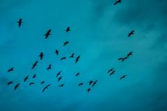 Fly blue (igorpinheiro81) Tags: xingó xingo garças sergipe brasil canion canyon