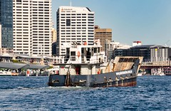 Barge Tambai II heads into Darling Harbour past Barangaroo (john cowper) Tags: sydneyharbour darlingharbour barge tambaiii workingboats sydney newsouthwales