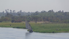 Dhow Sailboat (Rckr88) Tags: dhow sailboat dhowsailboat sail sailing ship ships boats boat nileriverupperegypt nileriver upperegypt nile river upper egypt africa travel travelling water waves wave reflection reflections reflectionsofthenile rivers riverbank thenileriver greenery green grass trees tree nature outdoors