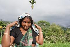 Sri Lanka, tea pickers (100) (walterkolkma) Tags: srilanka tea pickers teapickers centralhighlands nuwaraeliya strathdon teaestates women laborers tamils sonya6300