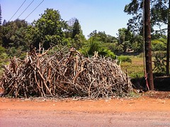 Firewood II - 2nd Feb 2017 (princetontiger) Tags: kenya firewood fuel