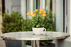 on a rainy day (Sabinche) Tags: flower cup table rain constance