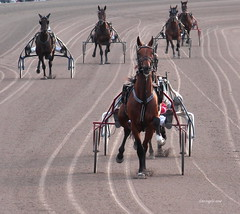 Full speed (ingelarene) Tags: fullspeed häst trav vagn fart ingelarené halmstad
