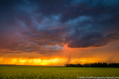 Colorful Storm (westrock-bob) Tags: color storm nature cuthill thunderstorm canon colour clouds 6d summer rain intensestorm mood threehills fierce alberta canola outdoors canada eos kneehillcounty copyright angry