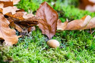 Natürliches Stillleben aufgenommen an der Edersee Talsperre - Natural still life photographed at the Edersee Talsperre
