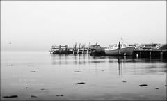 Seascape (Eline Lyng) Tags: seascape landscape nature fog water pir monochrom blackandwhite bw hasselblad x1d hasselbladx1d 90mm fujivelvia100 fuji silverefex norway larkollen longexposure