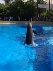 DSC00630 (jrucker94) Tags: vegas water dolphin swimming show secretgarden
