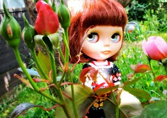 BCG & WoB 23/52 Outdoors ; Eleora is keeping an eye on the roses !