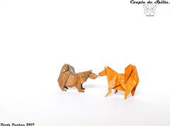 Couple de Splitz - Barth Dunkan. (Magic Fingaz) Tags: anjing barthdunkan chien chó dog hond hund köpek origami origamidog perro pies пас пес собака หมา 개 犬 狗