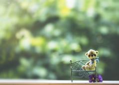 button does not like benches (rockinmonique) Tags: chrissbackyard eleven juneflickrgalsmeetup button bench bokeh tiny teddybear flower moniquew canon canont6s tamron copyright2017moniquew