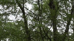 sheeps in the Venn (2) (okrakaro) Tags: video sheeps venn landsacpe nature animal schafe herde natur landschaft mai 2017 germany