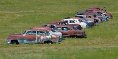 close neighbors (Patinagal) Tags: rust relic patina automobiles scrapyard
