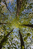 American Beech (eddee) Tags: wisconsin ozaukeecounty nature environment riveredge center newburg woodland trees