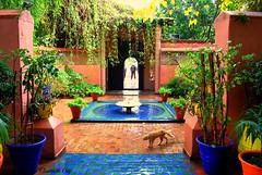 MAROCCO 01-2015 163 (Elisabeth Gaj) Tags: maroco012015 elisabethgaj marrakech afryka travel garden