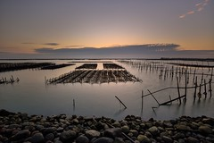 Sunset at Oyster Field 蚵田夕色 (Vincent_Ting) Tags: sunset 夕陽 東石漁港 蚵田 網寮漁港 fishingport gorgeoussky clouds 雲彩 oysterfield reflection 倒影 天空 sky taiwan chaiyi 台灣 嘉義 vincentting sea 海邊 water truss 蚵架