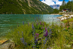 Flowers at the lake (Tiziano Photography) Tags: ceresolereale flowers colors lakefront lake mountains sky clouds nikond750 nikon d750 landscape italy fiori lago lungolago colori montagne cielo nuvole panorama