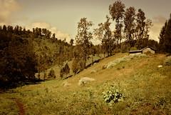 Hill House (elly.sugab) Tags: landscape hut hill house mountain highland ranupani semeru