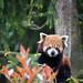 Firefox in a tree