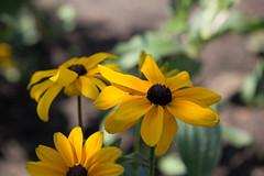 IMG_1891 (d_propp) Tags: muttartconservatory edmonton yegphotos yeggers flower flowers summer 2017