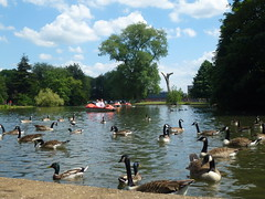 Abbey Park Leicester (KiranParmar) Tags: abbey park leicester ducks geese swans