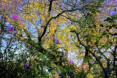 Winters Arrives- Autumn Leaves! (maginoz1) Tags: abstract landscape art manipulate curves winter trees bulla melbourne victoria australia june 2017 canon g3x